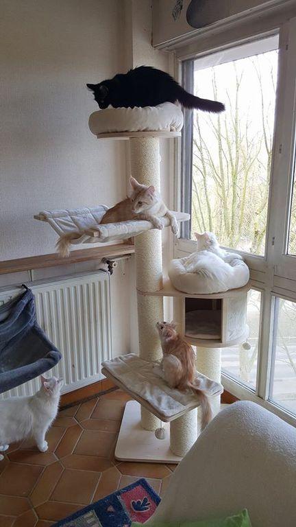 Si les chats avaient des profils datant